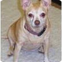 Adopt A Pet :: Petuna - Cleveland, OH