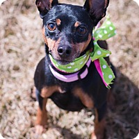 Adopt A Pet :: Roxie - Syracuse, NY