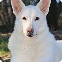 Adopt A Pet :: Hilda-B - Nashville, TN