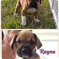 Adopt A Pet :: Rayna - Gainesville, FL