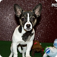 Adopt A Pet :: Moo - Patterson, CA