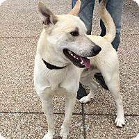 Adopt A Pet :: Smokey (fostered in TN) - Cranston, RI