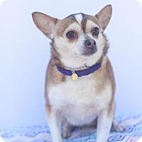 Adopt A Pet :: Nugget - Loomis, CA