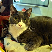 Adopt A Pet :: Joey - Broadway, NJ
