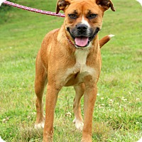 Adopt A Pet :: Donna~meet me~ - Glastonbury, CT