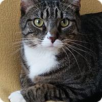 Adopt A Pet :: Pancho - Gaithersburg, MD