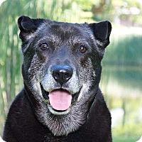 Adopt A Pet :: Teddy - Sudbury, MA
