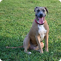Adopt A Pet :: Jillian - Huntsville, AL