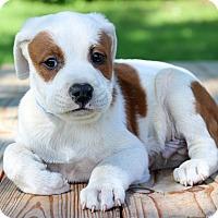 Adopt A Pet :: Tucker - Waldorf, MD