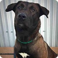 Adopt A Pet :: ELLA - Palmer, AK