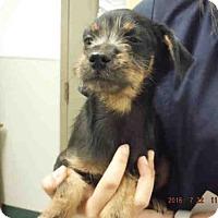 Adopt A Pet :: A569685 - Oroville, CA