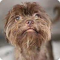 Adopt A Pet :: Chandler - Phoenix, AZ