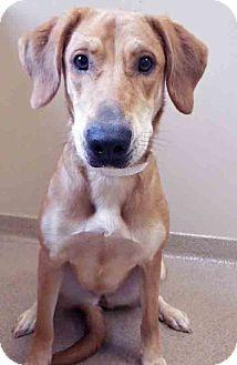 Shepherd (Unknown Type)/Hound (Unknown Type) Mix Dog for adoption in Oswego, Illinois - Jenny