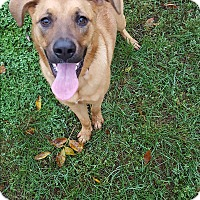 Adopt A Pet :: Angel - Indianola, IA