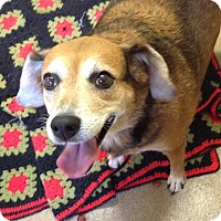 Adopt A Pet :: 1-11 Gracie - Triadelphia, WV