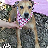Adopt A Pet :: Pocohantas - Kimberton, PA