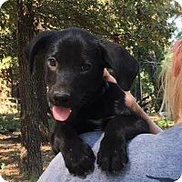Adopt A Pet :: Kashi - cute, playful, smart! - Pewaukee, WI