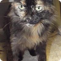 Adopt A Pet :: 20598 - Cheboygan, MI