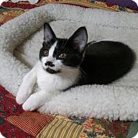Adopt A Pet :: Rinnah - Cincinnati, OH