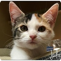 Adopt A Pet :: Juliette - Flushing, NY
