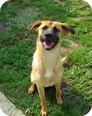 Shepherd (Unknown Type) Mix Dog for adoption in Acushnet, Massachusetts - Misha