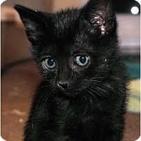 Adopt A Pet :: Jellybean (Kitten) - Palmdale, CA