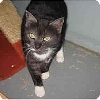 Adopt A Pet :: Darla - Mission, BC