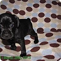 Adopt A Pet :: D.J. - Hazard, KY