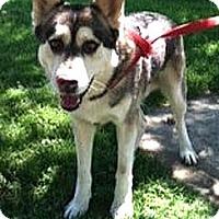 Adopt A Pet :: I'm SUPER URGENT - Sacramento, CA