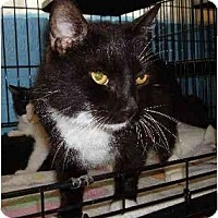 Adopt A Pet :: Brigitte - Odenton, MD