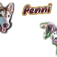Adopt A Pet :: Penni - Seminole, FL