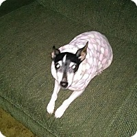 Adopt A Pet :: Sophie - Kendall, NY