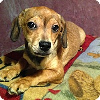 Adopt A Pet :: Clyde - Toledo, OH