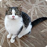 Adopt A Pet :: Raz - Wakinsville, GA