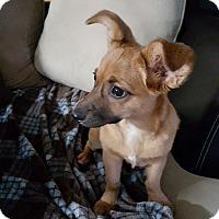 Adopt A Pet :: Pennie - Marietta, GA