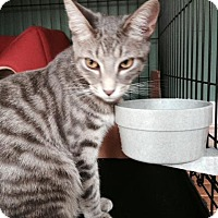 Adopt A Pet :: PJ - Stafford, VA