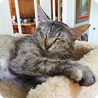 Adopt A Pet :: Callie - Bentonville, AR