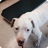 Adopt A Pet :: Andrey - West Hills, CA
