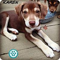 Adopt A Pet :: Karen - Kimberton, PA
