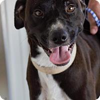 Adopt A Pet :: McGee - Choudrant, LA