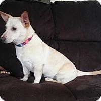 Adopt A Pet :: Rylynn - New Oxford, PA