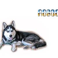 Adopt A Pet :: Rosco - Seminole, FL