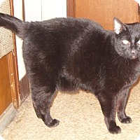 Adopt A Pet :: Merlin-ADOPT or FOSTER - Union Grove, WI