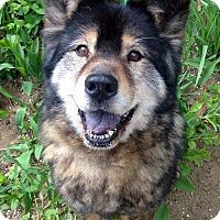 Adopt A Pet :: Bandit - Fennville, MI