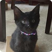 Adopt A Pet :: Indi - Colorado Springs, CO