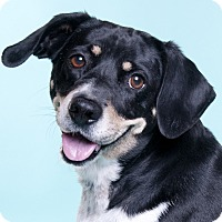 Adopt A Pet :: Daisy - Chicago, IL