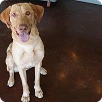 Adopt A Pet :: Maverick - San Antonio, TX
