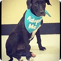 Adopt A Pet :: Asher - Grand Bay, AL