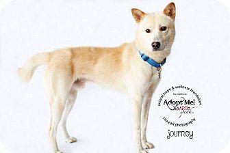 Jindo Mix Dog for adoption in Denver, Colorado - Journey