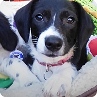 Adopt A Pet :: Kisses - San Diego, CA